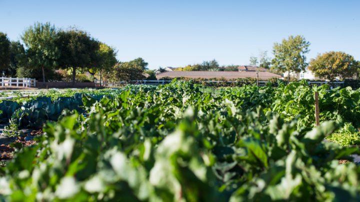 The Farm at Agritopia